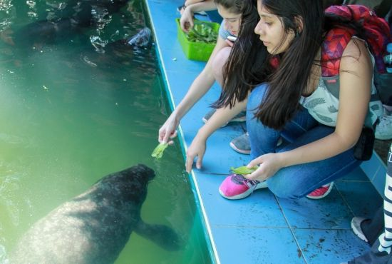 Manatee Rescue Center